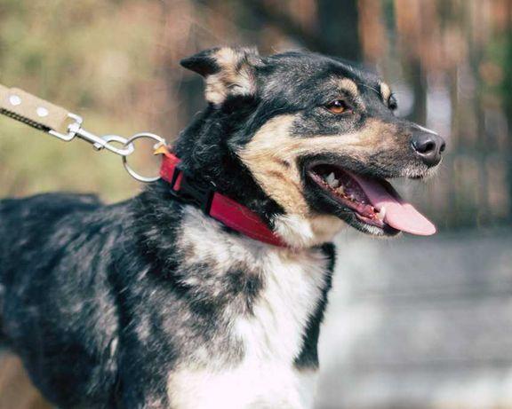 Симпатичная некрупная собачка ищет дом и семью! стерилизована, привита