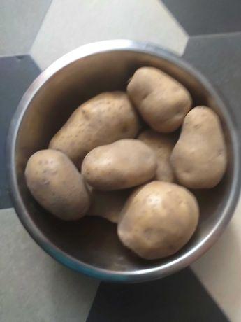 Ziemniaki jadalne ekologiczne