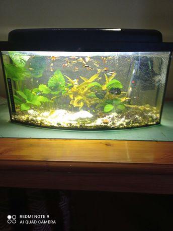 Akwarium z osprzętem 60l