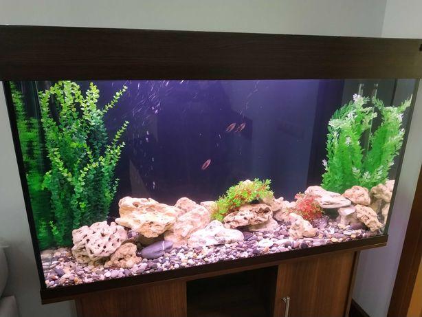 Оформление и ремонт аквариумов