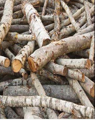 Вывезу дрова в бревнах.