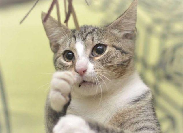 котята котенок котик кошечка стерил-ция помощь