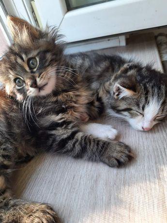 Пушистые комочки в хорошие руки бесплатно. Котята даром. Котенок.