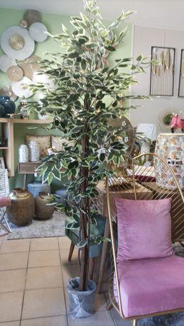 Planta / Árvore Artificial Fícus Bicolor 180cm ( Novo)