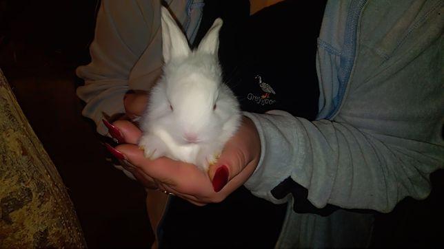 Продам кролинят