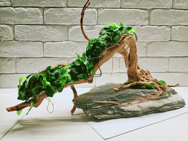 """Drzewko do akwarium """"Bonsai"""""""