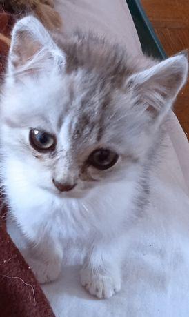 Возьмите из приюта котика, мальчик Зефир, 2 месяца.