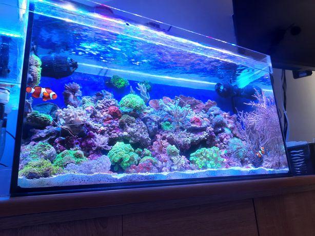 Koralowce morskie akwarium