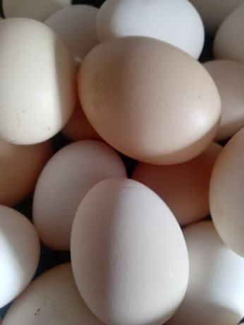 Jajka wiejskie 1 zł