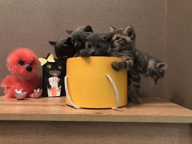 Котики , котята котенок в дар !!!