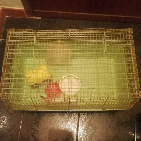 Gaiola para hamster ou porquinhos da Índia com acessórios