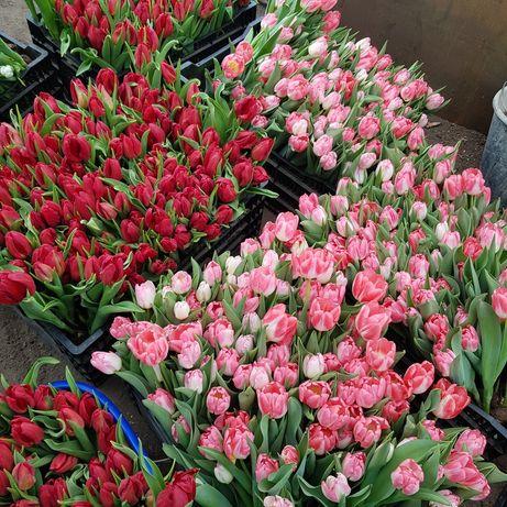 Тюльпан на 8 марта.В наличии уже