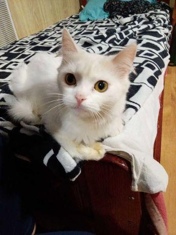 Отдам кошку в добрые руки в связи с выездом за границу.