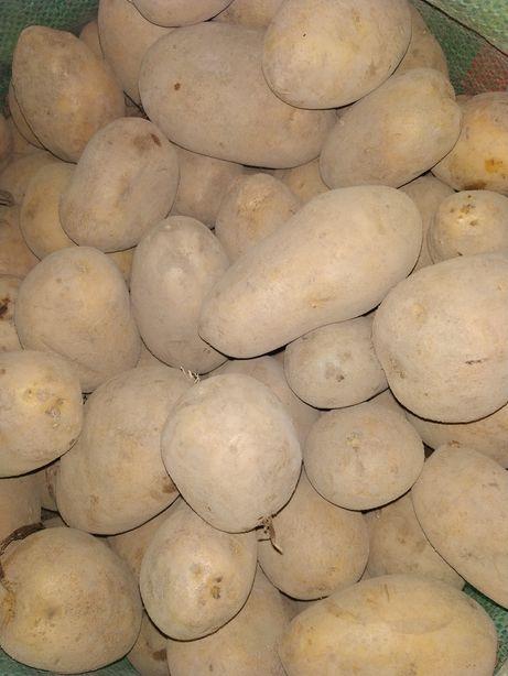 ziemniaki jadalne żółte