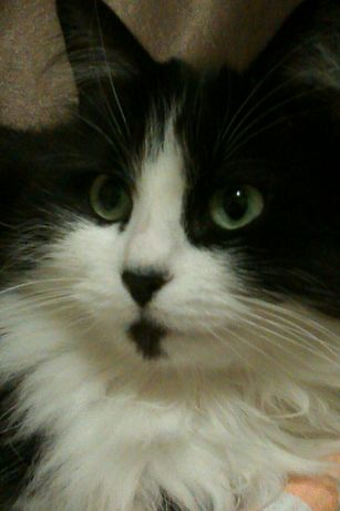Пропала кошка Подгородное