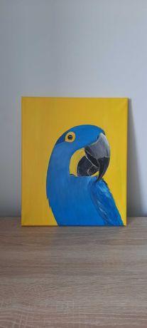 Obraz/portret papugi