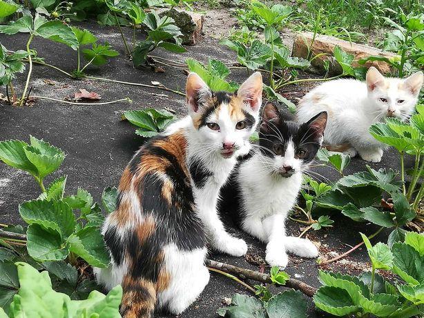 Cudowne kotki szukają domu
