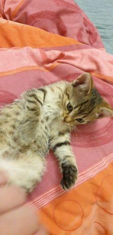 Koteczka Migotka szuka domu tymczasowego a najlepiej stałego
