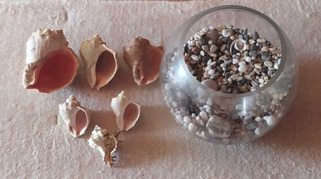Ракушки, гравий морские