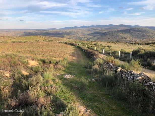 Terreno ideal para plantio de olival ou amendoal no vale do Côa