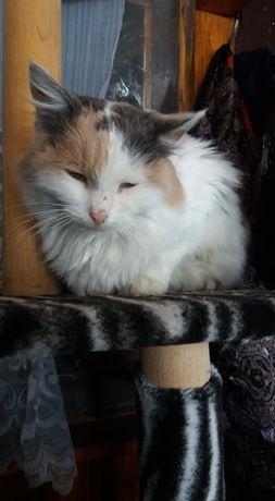 Кішка Бєлочка