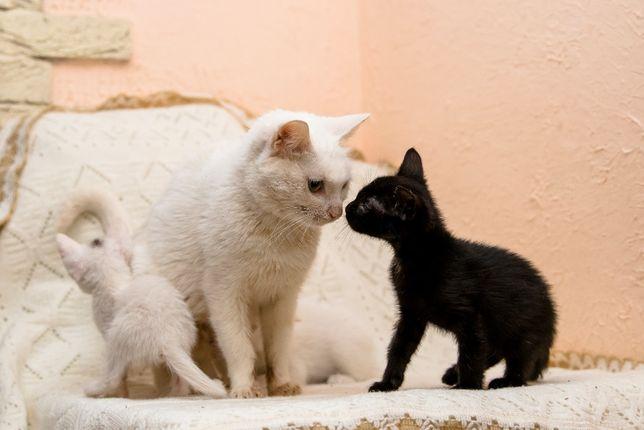 Кошечка Белочка ищет дом. 1 год