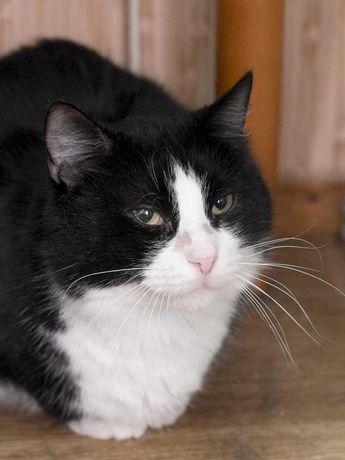 Феликс, 6 лет, кастрирован и привит. Добрый и ласковый кот.