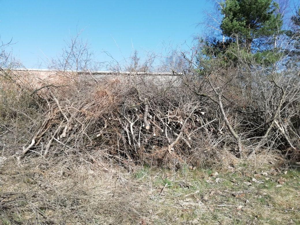 Gałęzie, resztki po zrębowe-za darmo