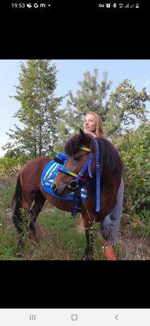 Пони конь жеребец