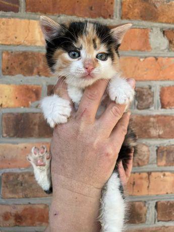 Віддам маленьких котиків