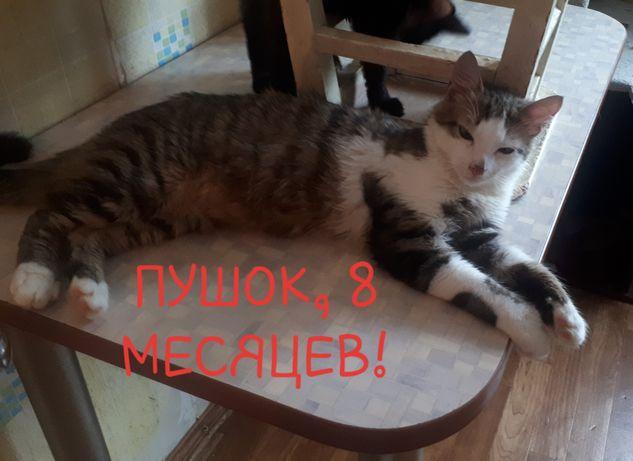Кот  подросток 8 месяцев Пушок кастрирован