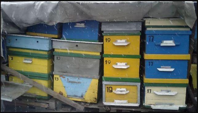 Продам ульи и пчелосемью