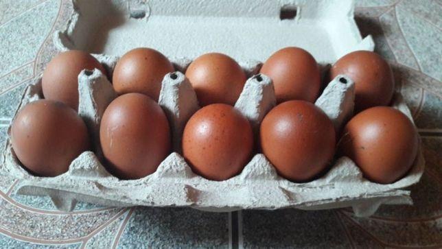 Jaja lęgowe kur rasy marans