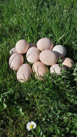 Jajka wiejskie z wolnego wybiegu