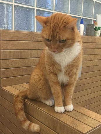Zaginął rudy pręgowany kotek Filon