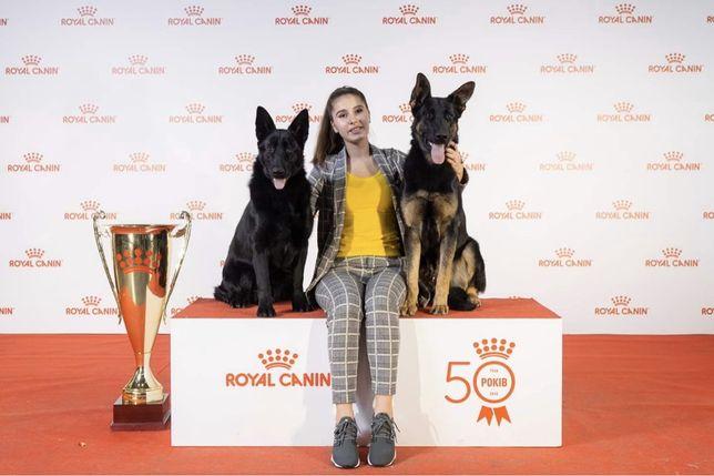 Выставка собак регистрация Хендлер Подготовка к выставке