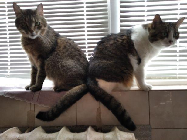 Передержка котиков