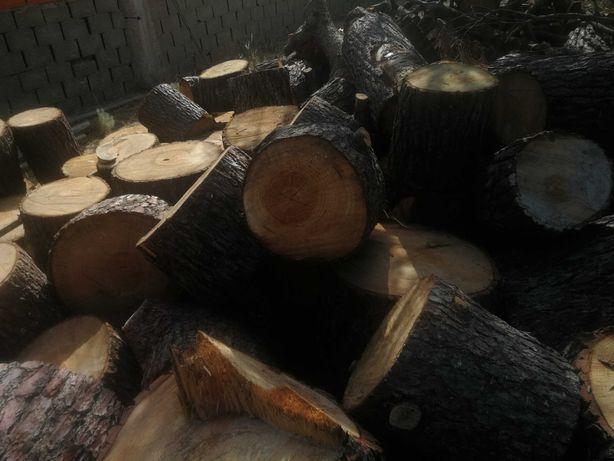 Vendo troncos do pinheiro( cortados) para lenha