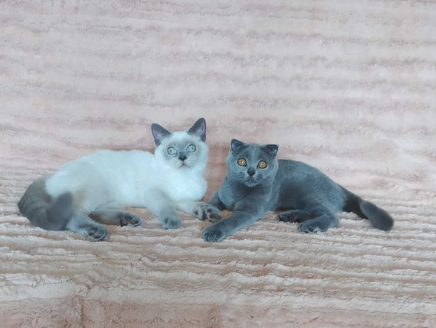Самые ласковые плюшевые котята!!!