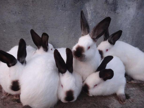 Живым весом кролики, нутрии, овцы, ягнята