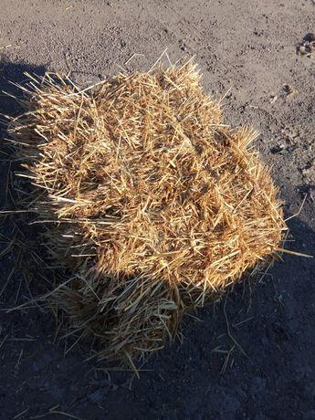 Ячневое сено из под люцерны.