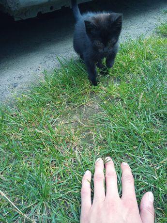 Oddam kotka czarny