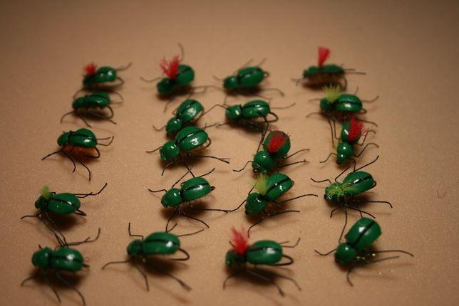 Piankowce, muchy na klenie, jazie, płocie i pstrągi.