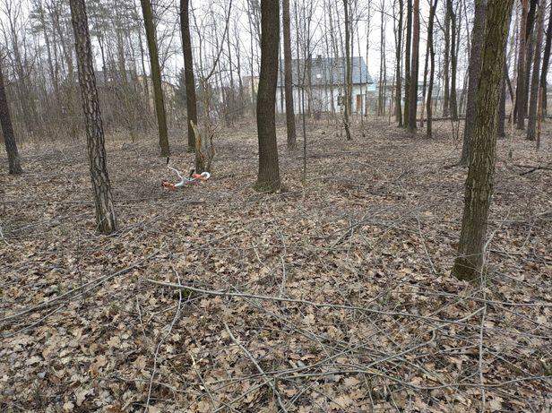 Koszenie Trawy i Wycinka Drzew Plus Inne Usługi