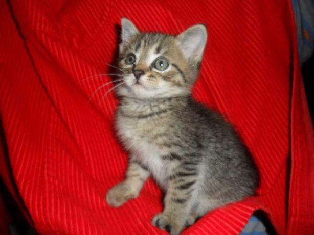 Кому маленького котёнка-чертёнка ? Дарим !