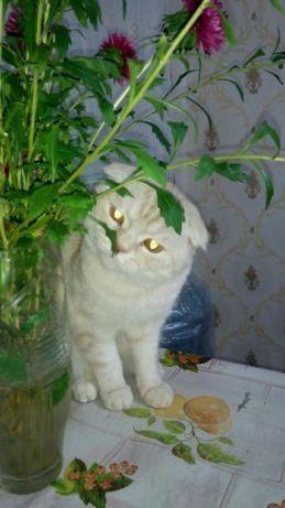Вязка Шотландский Вислоухий Кот