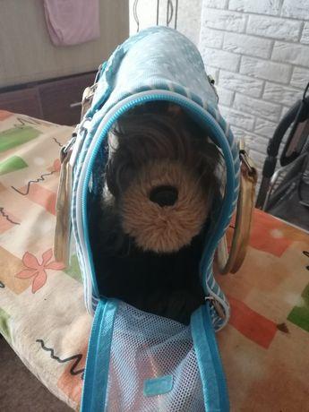 Собака в сумке-игрушка