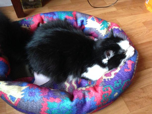 Домики, кроватки для кошек и котов !!!