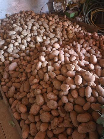 Batatas vermelhas e brancas 30 kg