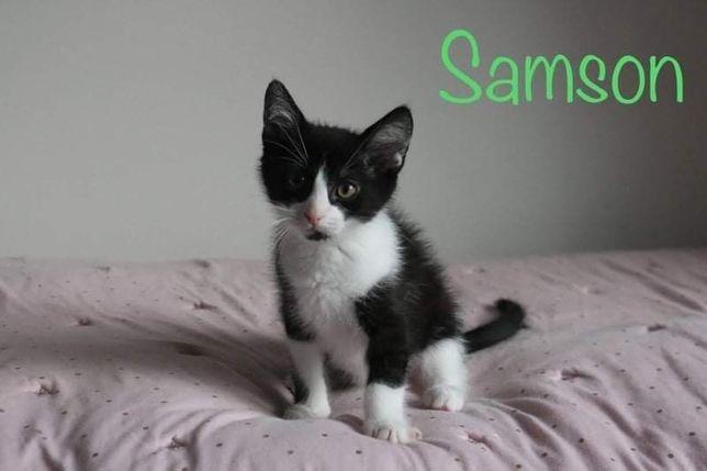 Samson szuka domu!